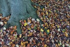 Giardino Di Ninfa - 2 (edlion259) Tags: ninfa lazio regionelazio italy italia giardinodininfa giardino allaperto tree albero colours colori caetani yellow green foglie