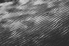 Minimal #2 (Maxi Winter) Tags: abstract abstrakt abstrait struktur structure texture diagonal lines linien diagonalen mer meer sea northsea nordsee merdunord reflection réflexion mirage mirroring puddles pfützen flaques wattenmeer lamerdeswadden maréebasse ebbe mudflat lowtide blackandwhite schwarzweis noiretblanc sand sable