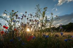 Sonnenuntergang (gin_able) Tags: summer nature clouds sommer feld himmel wolken