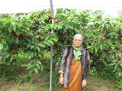 Cherry Picking-13.02 (davidmagier) Tags: portrait usa fruit newjersey cherries princeton mataji