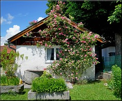 The Penzberg cottage (mhobl) Tags: roses cottage haus rosen häuschen