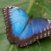 Stratford Butterfly Farm_12
