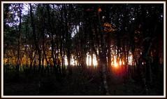 O bosque animado (Jos Luis Lpez Vzquez) Tags: santiago de nikon do camino jose luis monte lopez lugo rei santo ano melide gozo sixto palas vazquez sarria camio sisto portomarn arza ourol s8000 orol