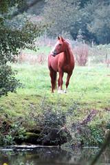 085 (fidber) Tags: nature animal cheval eau lorraine ruralit saintois
