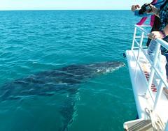 That close (padraic_koen) Tags: australia roadtrip queensland whales humpback herveybay