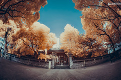 (d3sign) Tags: sky tree ir temple hongkong traditional chinese fisheye infrared tradition