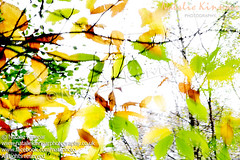 Leaves Splash Abstract 1 (Natalie Kinnear) Tags: autumn trees orange white abstract tree green nature leaves yellow forest woodland print happy photography photo leaf movement woods woodlands energy colorful branch bright photos branches fineart wallart photographic canvas autumncolors photographs photograph prints brightcolors abstracts interiordesign forests autumnal homedecor fineartphotography brightlycolored canvases fineartcanvas fineartphotographicprint nataliekinnear fineartphotographicprints nataliekinnearphotography fineartcanvases