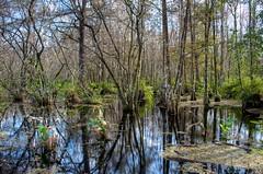 _DW12183 (Upstate Dave) Tags: florida corkscrewswamp