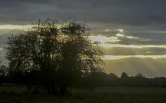 Autumn sky, York (nican45) Tags: york autumn light sunset sky cloud sunlight tree fall weather clouds canon seasons yorkshire powershot sunbeam sx210 hobmoor sx210is