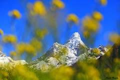 Yellow Ama (AvijitNandy) Tags: ama ebc dablam