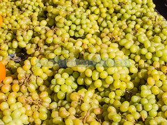 Green grapes (melastmohican) Tags: california summer food white green nature fruit dessert juicy healthy berry soft unitedstates farmers market sweet farm cluster harvest tasty fresh seedless eat bunch mountainview produce organic grocery agriculture grape ripe nutrition fruitful