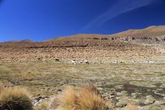 Wildlife on the climb to Uturuncu