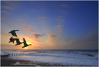 Barmouth Sunset with Geese