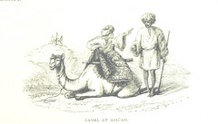 Image taken from page 223 of 'A thousand miles up the Nile ... Second edition, revised by the author' (The British Library) Tags: small egypt camel publicdomain vol0 page223 bldigital mechanicalcurator pubplacelondon date1889 edwardsameliablandford sysnum001040574 imagesfrombook001040574 imagesfromvolume0010405740