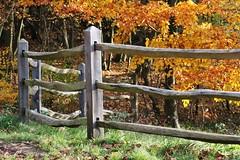 Curved Fence (haberlea) Tags: wood autumn trees orange green fence virginiawater virginiawaterlake abigfave