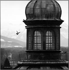 Nonntal_Kirche mit Taube_Hasselblad (ksadjina) Tags: winter salzburg 6x6 film analog austria blackwhite scan ausschnitt hasselblad500cm nonntal silverfast kodak400tmax 10min adoxaph09 nikonsupercoolscan9000ed probeaufnahmen carlzeisstessar350mmf156