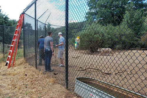 Wolf Enclosures at California Wolf Center