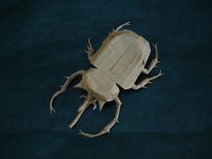 Elephant Beetle (shuki.kato) Tags: elephant paper origami tissue beetle double fold scarab kato shuki