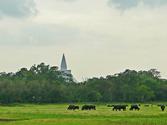 Nuwarawewa - Anuradapura (Janesha B) Tags: nature culture srilanka anuradapura