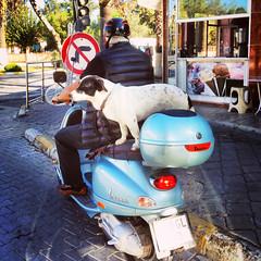 Spotted on the street (VillaRhapsody) Tags: dog man bike friend funny challengeyouwinner