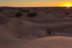 true desert (Ryoushi no syokubutsuen) Tags: art sahara nature landscape desert arabic berber marocco marrakech magrib almagrib medrassa
