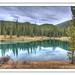 Forgetmenot Pond, Alberta