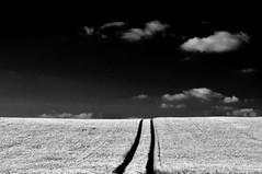 lines (Torsten Reuschling) Tags: blackandwhite bw white black monochrome field lines clouds corn wolken minimal sw schwarzweiss dsseldorf infra sonyslta57