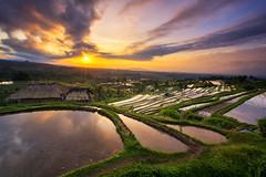 Jatiluwih Rice Terrace (eggysayoga) Tags: bali cloud reflection nature sunrise indonesia landscape nikon asia rice paddy terrace tokina filter 09 lee awan f28 hijau pagi graduated refleksi sawah gnd jatiluwih tabanan terasering d7100 1116mm