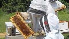Checking the hive (Barefoot In Florida) Tags: florida grandmother bees granddaughter beehive beekeeping honeybees stpetersburgflorida boydhillnaturepreserve