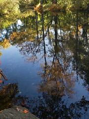 Salem NH (Boneil Photography) Tags: boneilphotography brendanoneil canon powershot g16 fall foliage newengland water reflections