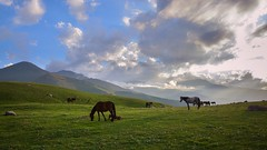 Kyrgyzstan-7428 (EbE_inspiration) Tags: kyrgyzstan nikon nikond7100 nature serene green hill horse hills landscape mountain