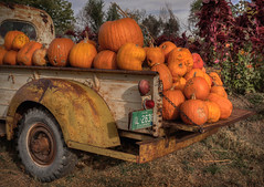 Pumkin' Pickin' Pick Up - Boulder County, Colorado (Bryan Harding - Outside the Box Design Studio) Tags: pumpkin fall farm boulder longmont bouldercounty colorado frontrange truck oldtruck antiquetruck history international pickup farmtruck harvest