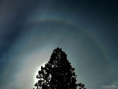 Solar halo (Daniel Boca) Tags: halo solar sun sunlight light summer nature outdoor tree trees colour colours colorful color colors cloud clouds blue icecrystal icecrystals daylight