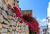 Ibiza (Edi Bähler) Tags: architektur bauwerk blüte fassade gebäude ibiza mauer pflanze spanien architecture blossom building facade frontage plant structure nikond5 28300mmf3556