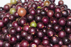 Muscadines 1 (nsdis) Tags: muscadines grapes
