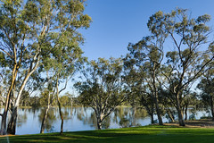 The Murray @ Mildura (Marian Pollock (Weiler)) Tags: mildura murray river victoria nsw australia reflections flooded gumtrees still sunny shadows grass bank outback boronga