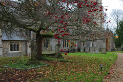 Churchyard Nature (Adam Swaine) Tags: churchyard church churches trees gravestones england english englishvillages ukcounties britain canon cambsvillages cambs swaine autumn ruralvillages ruralchurches