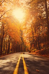 Going up the Country (Michael Swaja Photography) Tags: vernonia oregon or city county road color light leaves fall autumn nature scenery landscape beauty beautiful north west weather perspective pov sun shine trees woods vibrant nikon d5100