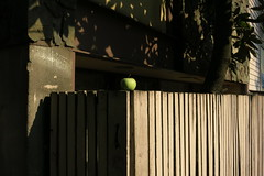 Inexplicable Granny Smith (Blinking Charlie (tanned, rested, and ready)) Tags: foundobjects grannysmithapple plankfence centraldistrict centralarea 16thavenue secondhill seattle washingtonstate usa canonpowershots110 blinkingcharlie 2015