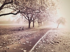 Autumn series (Nick Kenrick.) Tags: path fog trees jacklondonlens outdoor autumn winter