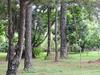 DSCN0313 (apacheizabel) Tags: lago pássaros árvores céu pinhas tronco espelho dágua queroquero rolinhas banco no bosque família de galinhas passeio parque centro aeroespacial da aeronáutica cta são josé dos campos sp