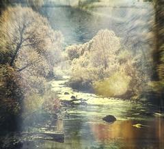 river of gold (jssteak) Tags: canon t1i colorado water river fall trees reflection lightleak vintage