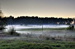 Soir brumeux_8143 (Luc Barré) Tags: losse estampon hameau village landes 40 brume soir coucher soleil