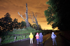 IMG_3741 (Ethene Lin) Tags: 新中橫 塔塔加 夫妻樹 夜景 夜拍 背影