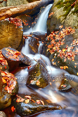 Fall Cascade of the Black River (George Oze) Tags: flow hacklebarneystatepark autumn beautyinnature blackriver closeup colorful creek daytime deciduous detail fall fallenleaves fallentree fineartphotography foliage forest graniterocks landscape morriscounty motioneffect nature newjersey nobody northamerica outdoor outdoors redleaves river rocks scenic season seasons smooth usa vertical water waterfall wetrocks longvalley unitedstatesofamerica us
