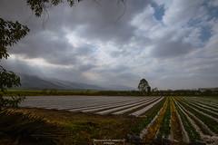 Strawberry fields (Mariano Colombotto) Tags: lules tucuman argentina strawberryfields strawberry field landscape paisaje campo frutillas cielo sky clouds nubes hills cerros infinitexposure autofocus ngc