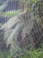 A big spider web at the bird sanctuary in Southern Ecuador.