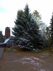 GRAUER HERBSTTAG IM SCHWARZWALD (ehbub@yahoo.de) Tags: schwarzwald tannenbaum laubbaum parkplatz fohrenbhl aussichtsturm waldweg schnee