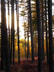 Fort Domaniale de Rambouillet - Saint-Lger-en-Yvelines - Yvelines - le-de-France - France (vanaspati1) Tags: fort domaniale de rambouillet saintlgerenyvelines yvelines ledefrance france vanaspati1 arbres trees lumire light vgtation automne