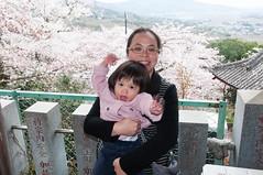 Struggling (Wunkai) Tags: sakuragawashi ibarakiken japan  jeanwang   amabikisanrakuhoji  sakura